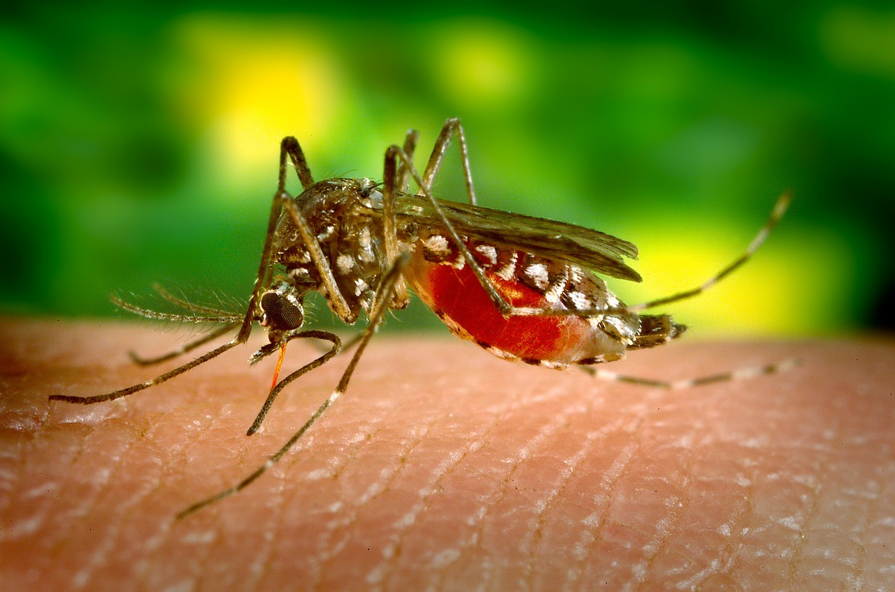 mosquito-542156_1280